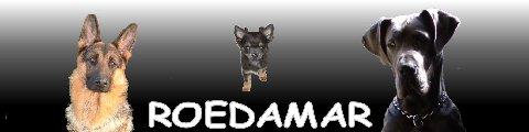 Rhonda Meath Dog Training