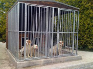 Standalone Kennels, very tidy and an attractive addition to any garden!